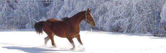 Urlaub Österreich Winter - Appartment